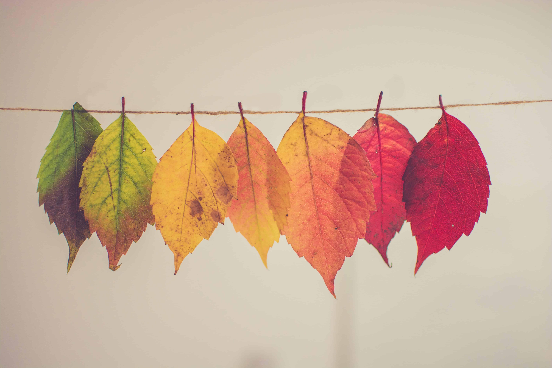 Blätter von grün nach rot hängen an Schnur vor weißem Hintergrund